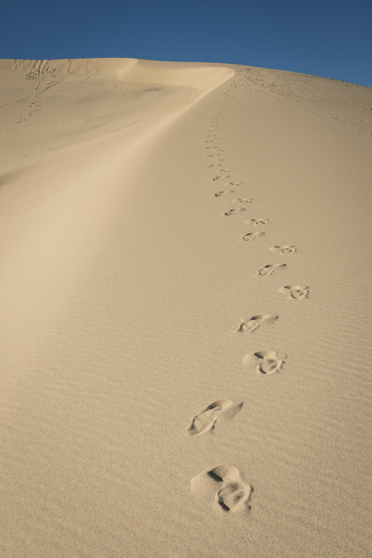 birds on sand during daytime