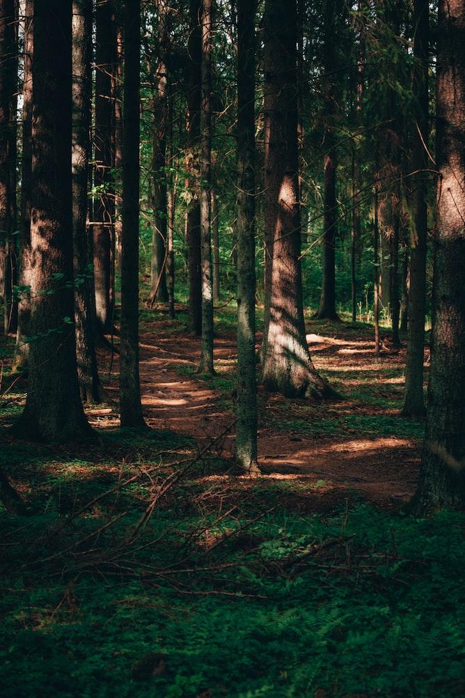 北欧スウェーデンの森