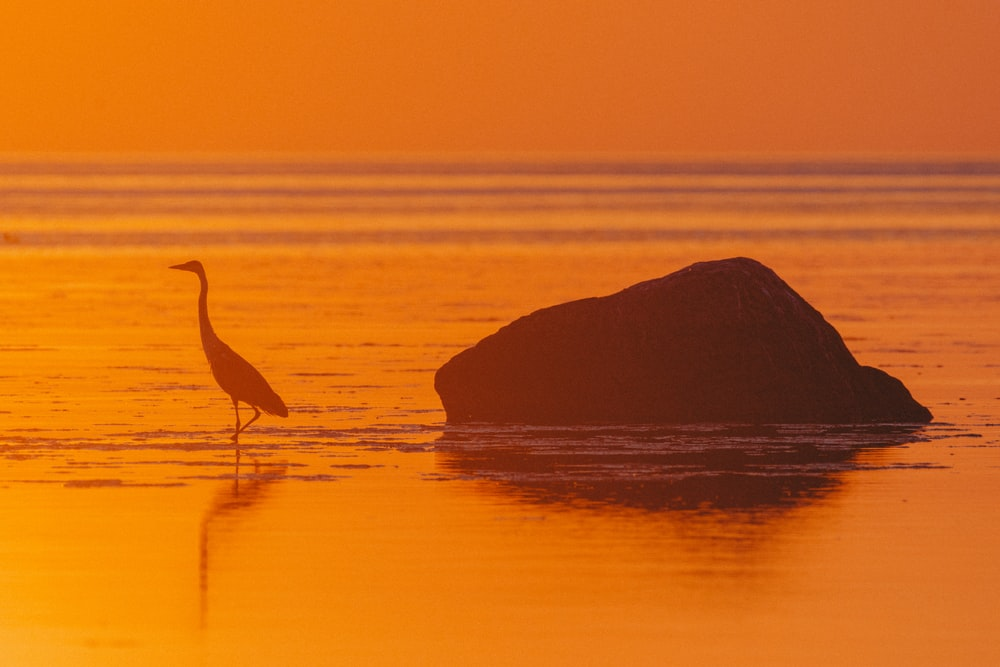 silhouette of bird on rock in the middle of water during sunset