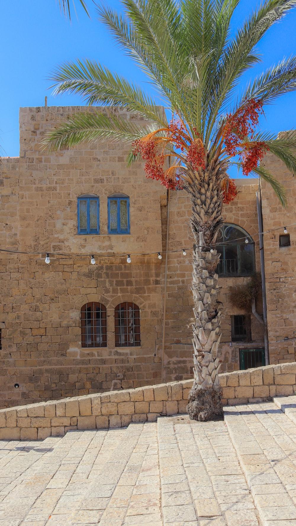palm tree near brown concrete building