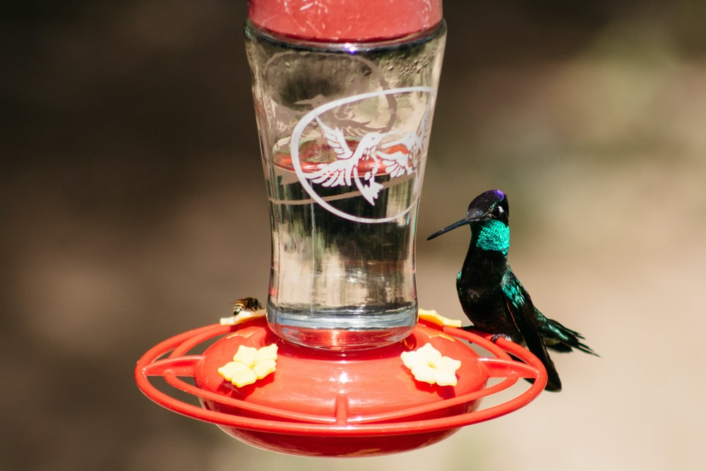 green and black humming bird on red plastic container