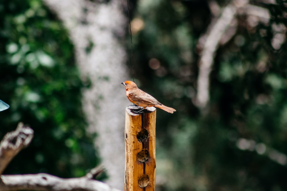 brown bird on brown wooden post during daytime