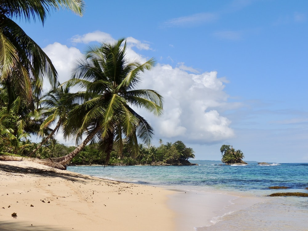 palm tree on beach shore during daytime