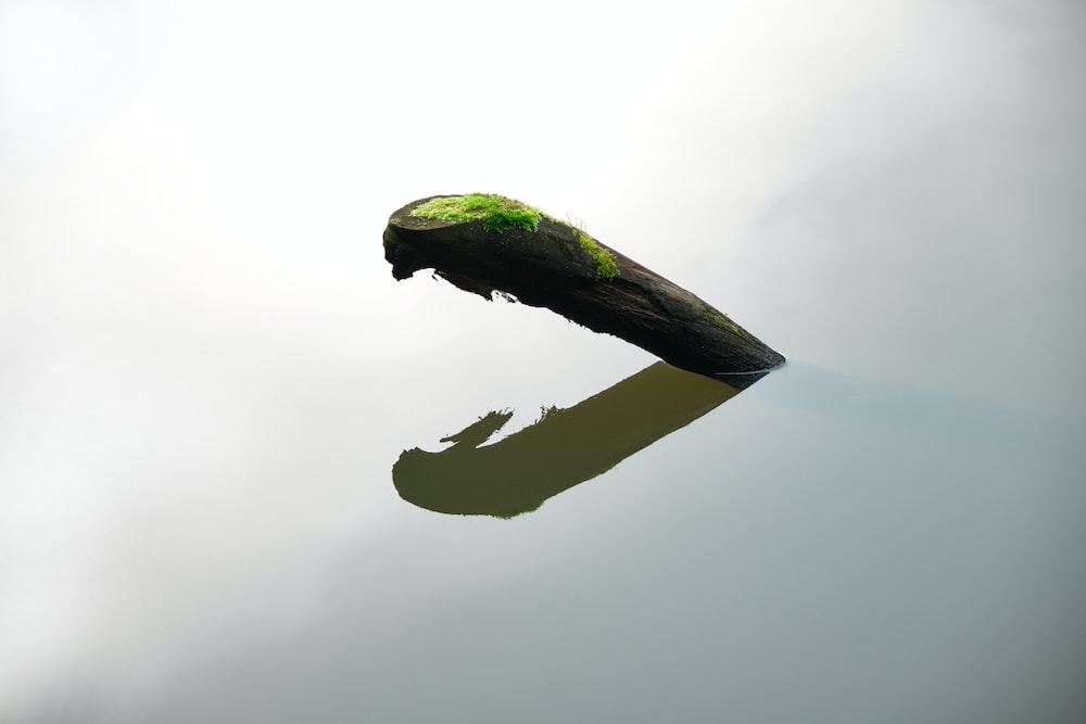 green bird on brown stick