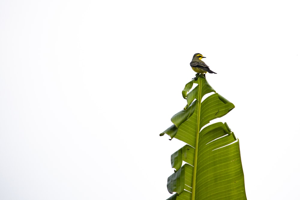 brown and black bird on green leaf during daytime