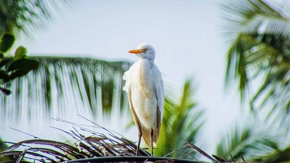 white bird on black metal fence during daytime