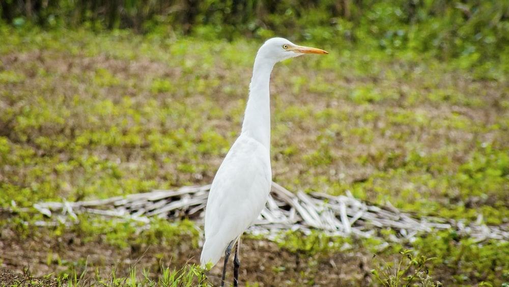white bird on brown wooden log during daytime