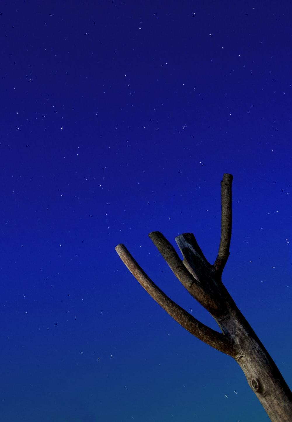 brown tree branch under blue sky