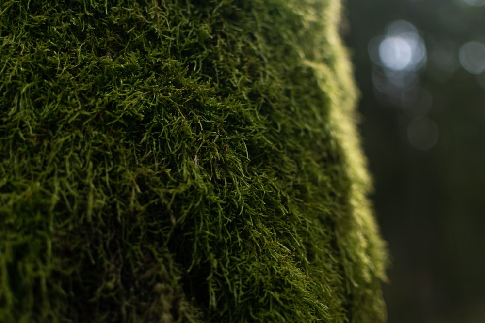 green moss in close up photography