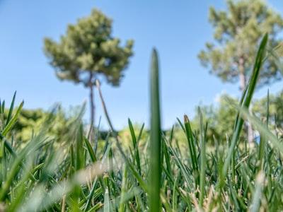grass ground photo in daytime