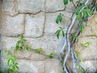 plant over concrete wall