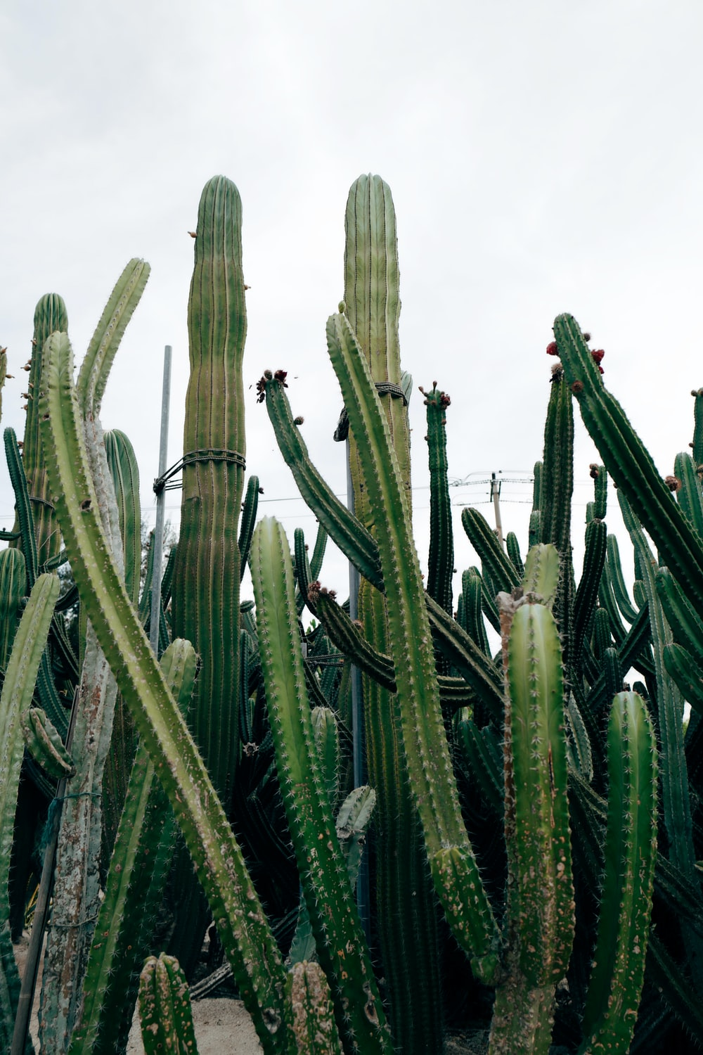 green cactus plants under white sky during daytime