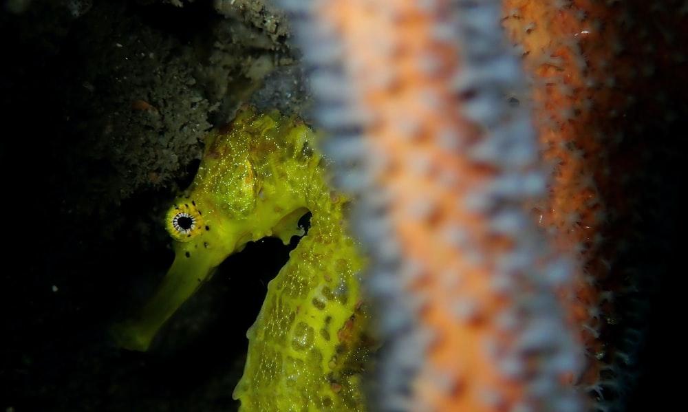 yellow and black pet fish