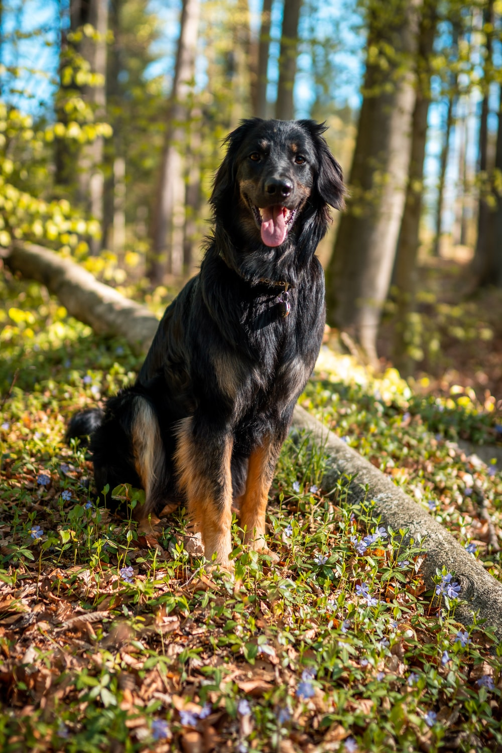 black and brown long coated dog on gray and yellow leaves during daytime