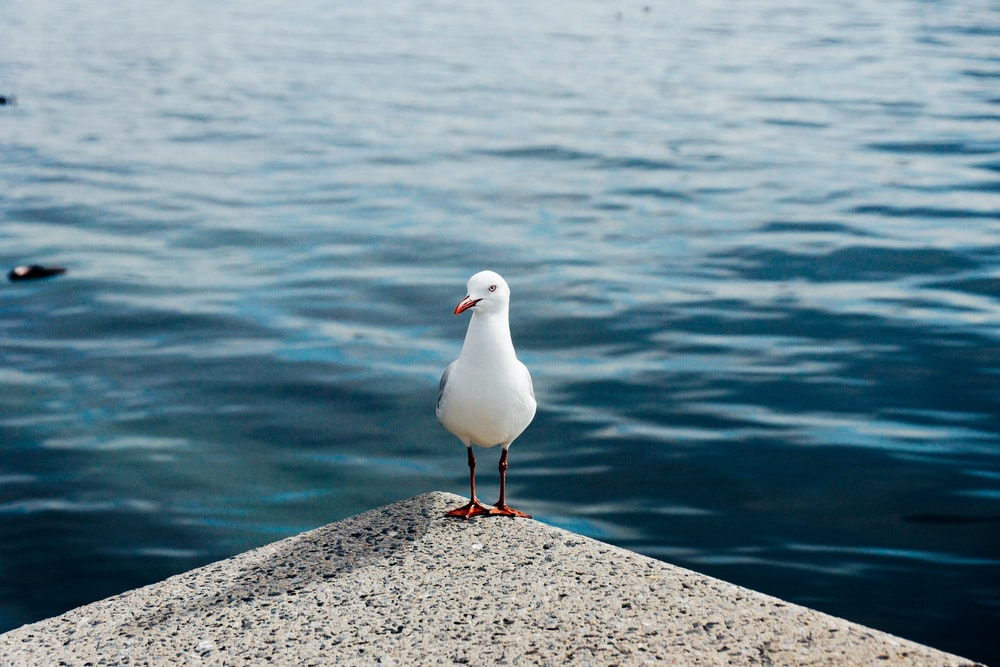 white bird on gray concrete surface near body of water during daytime