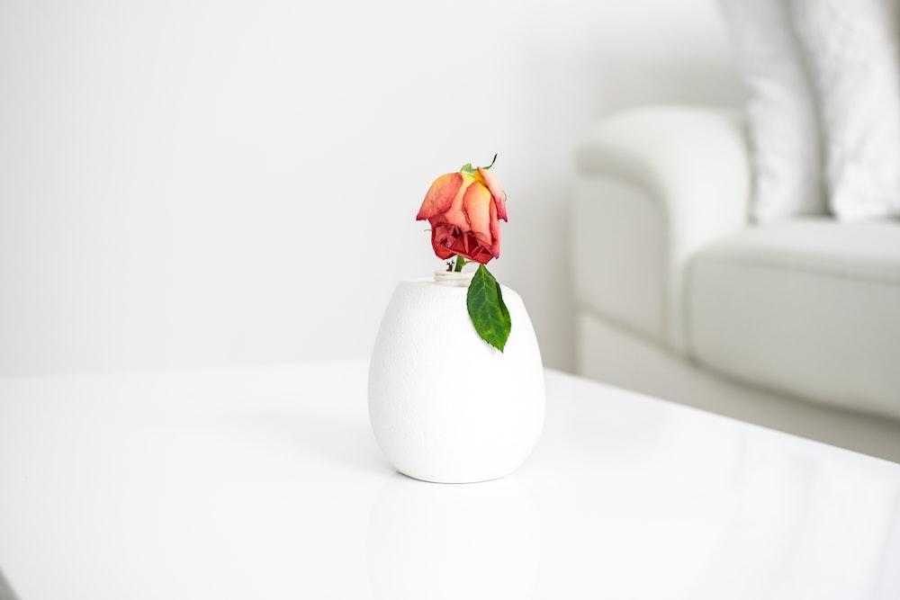 red rose in white ceramic vase on white table