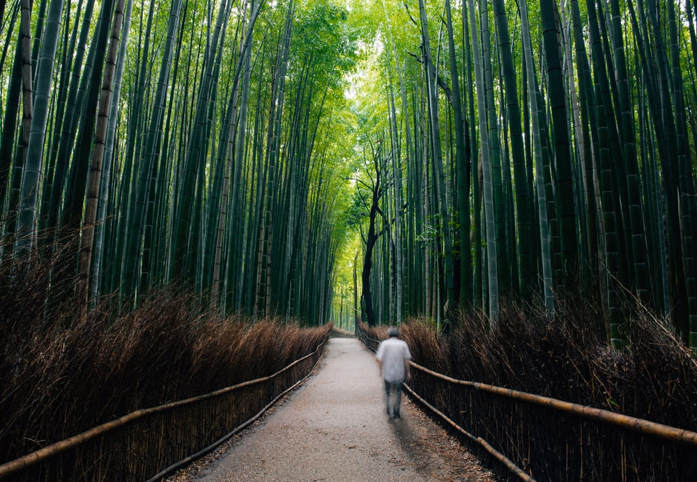 white short coated dog walking on pathway between green bamboo trees during daytime