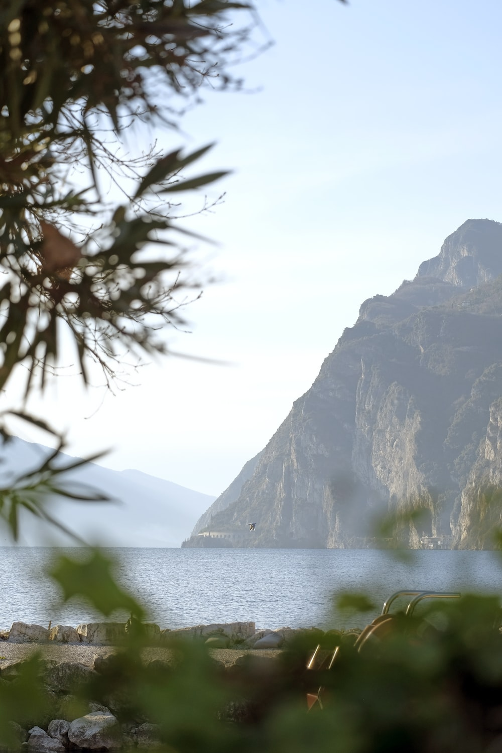 green tree near body of water and mountain during daytime