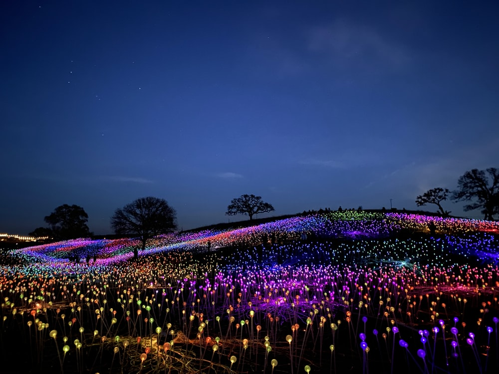 purple and green flower field during night time