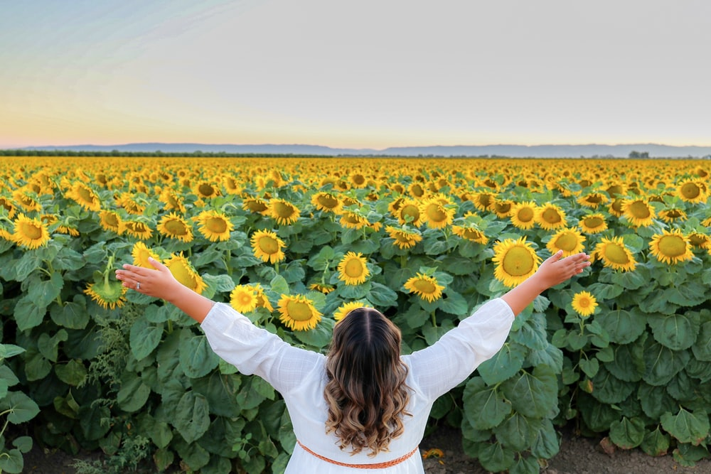 woman in white long sleeve shirt standing on sunflower field during daytime