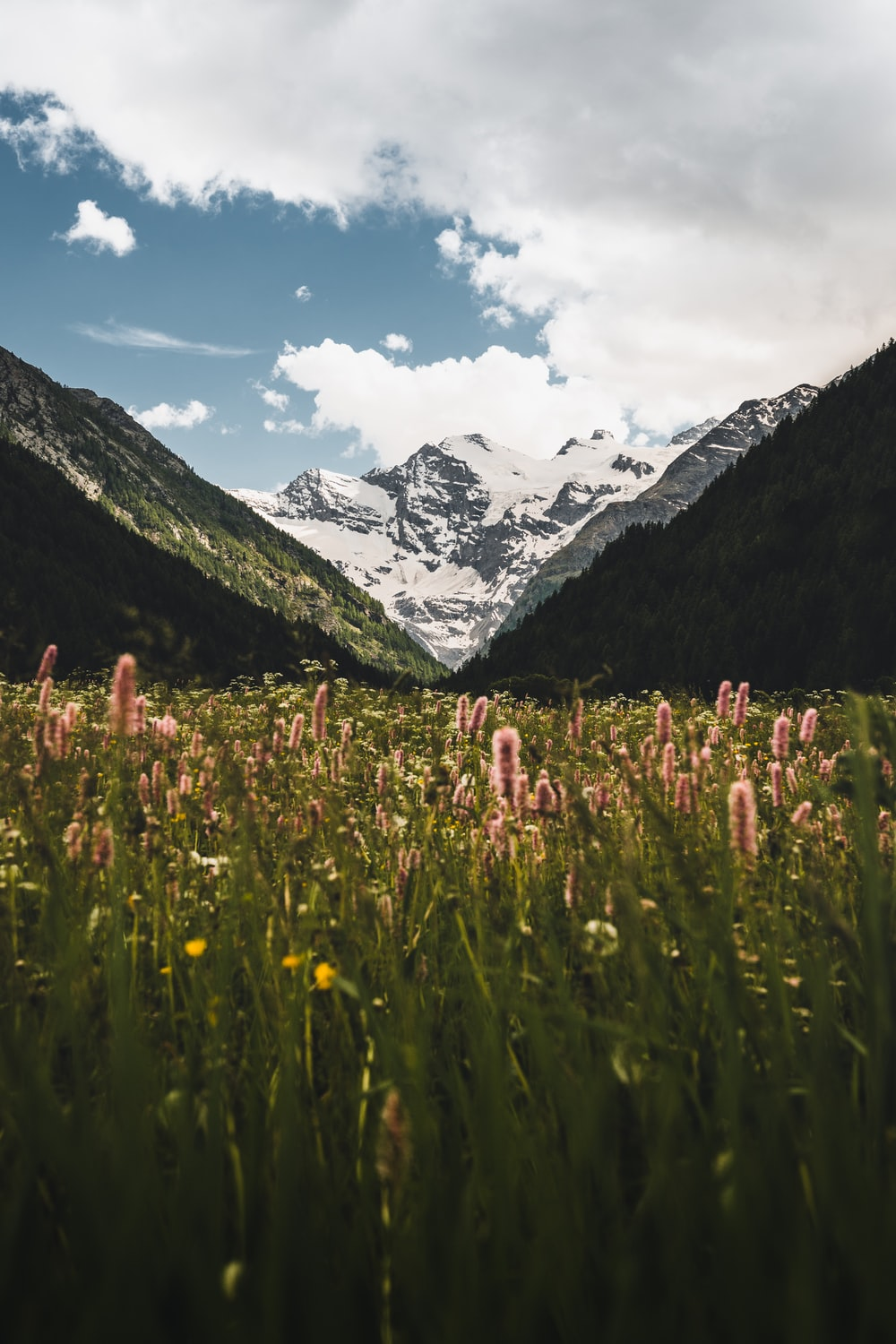 green grass field near snow covered mountain during daytime