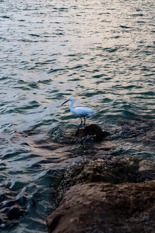 white long beak bird on rock near body of water during daytime