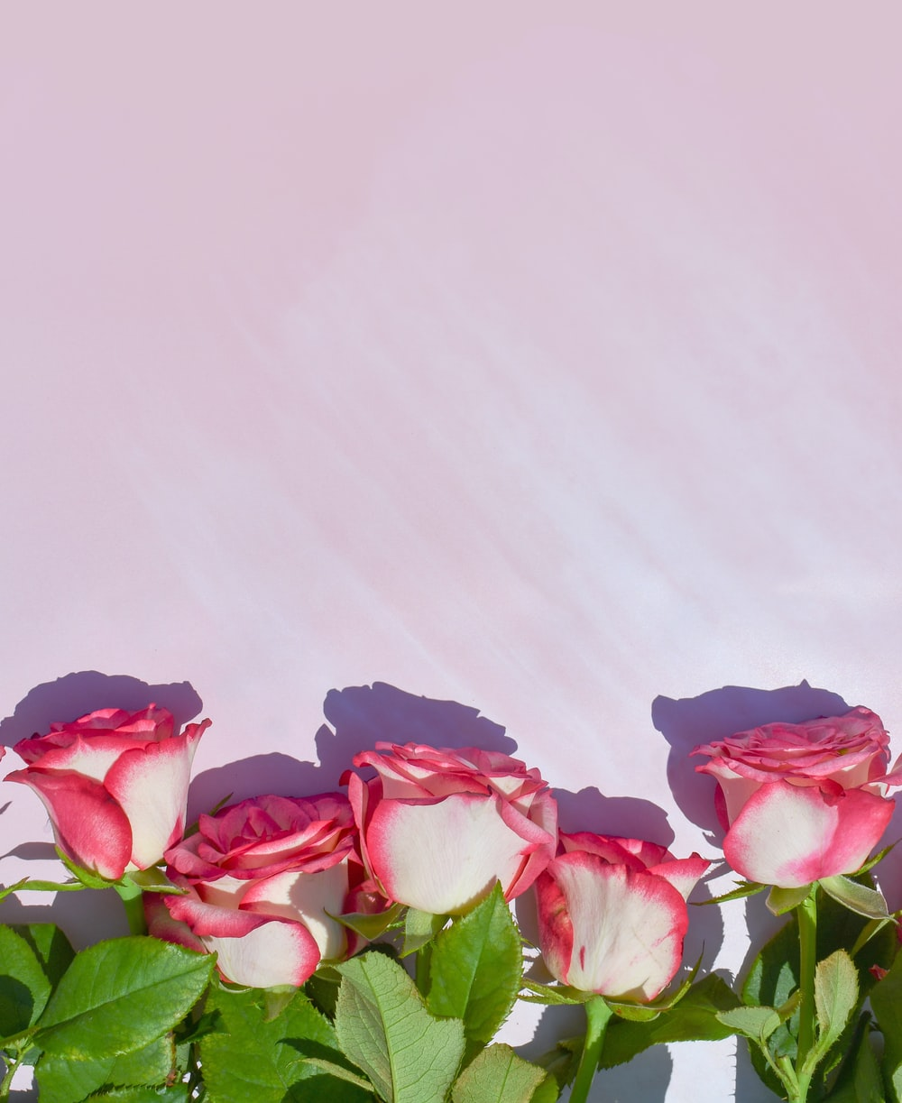 pink and red roses on white textile