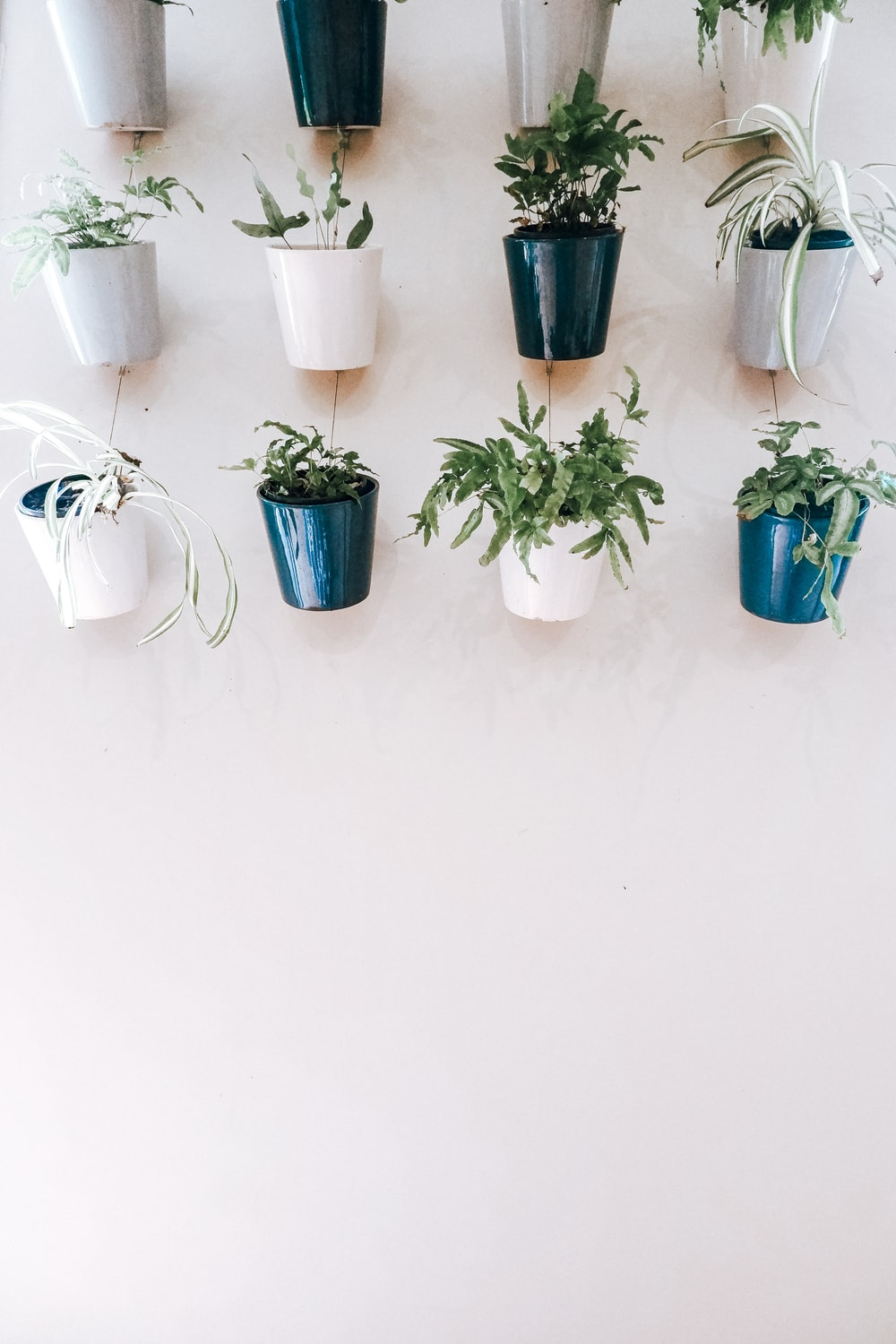 green potted plants on white ceramic pots