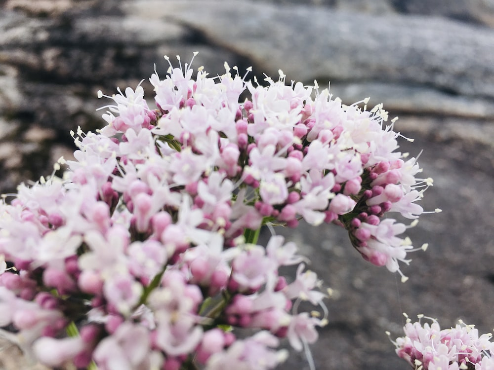 pink and white flowers on brown tree trunk