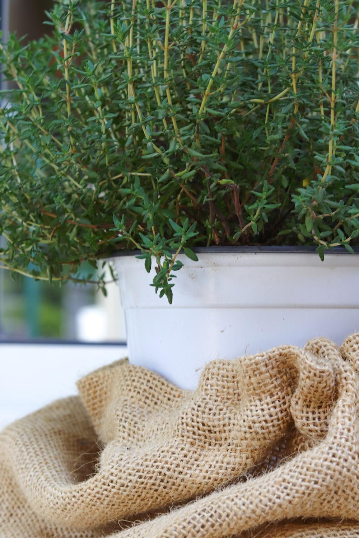 green plant on white plastic pot