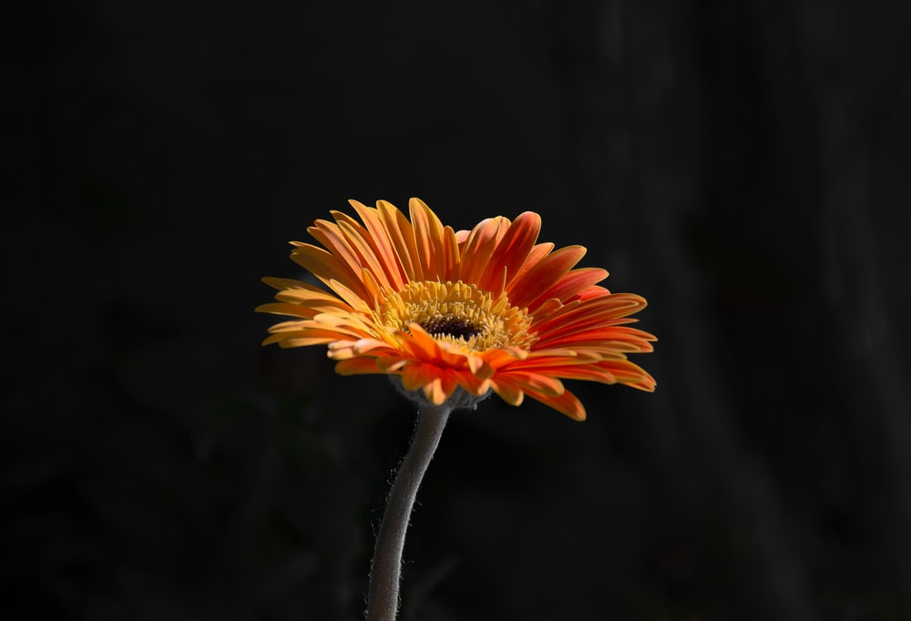 orange and yellow flower in tilt shift lens