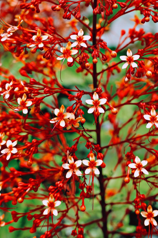 red and white flowers in tilt shift lens