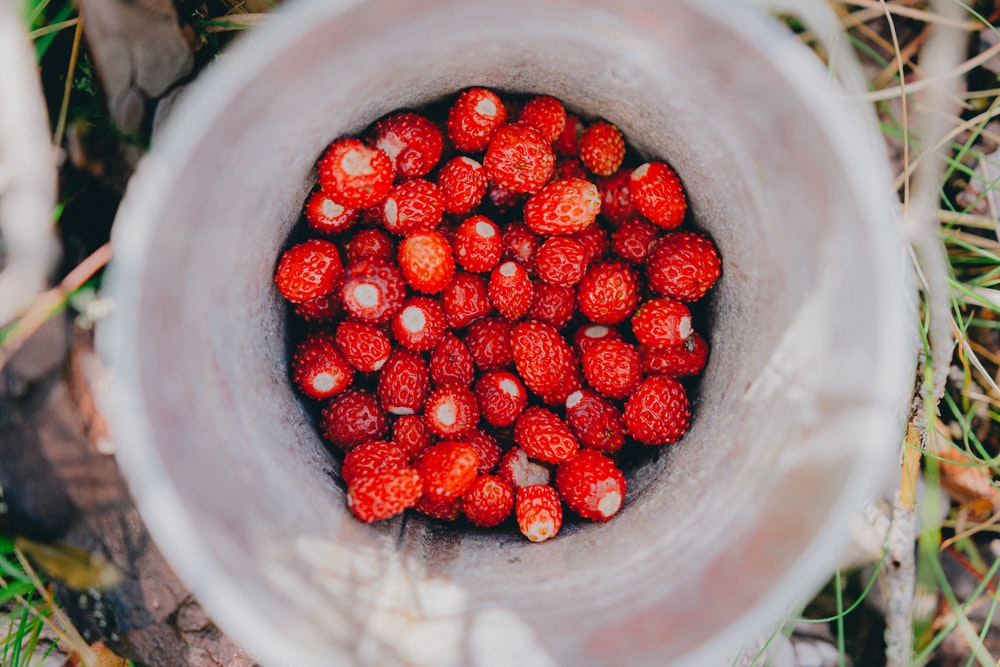red round fruits in white plastic bucket