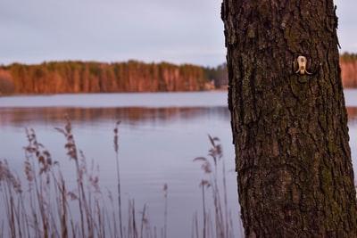 brown tree trunk near body of water during daytime latvia teams background