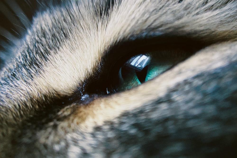 blue eyes with blue eyes