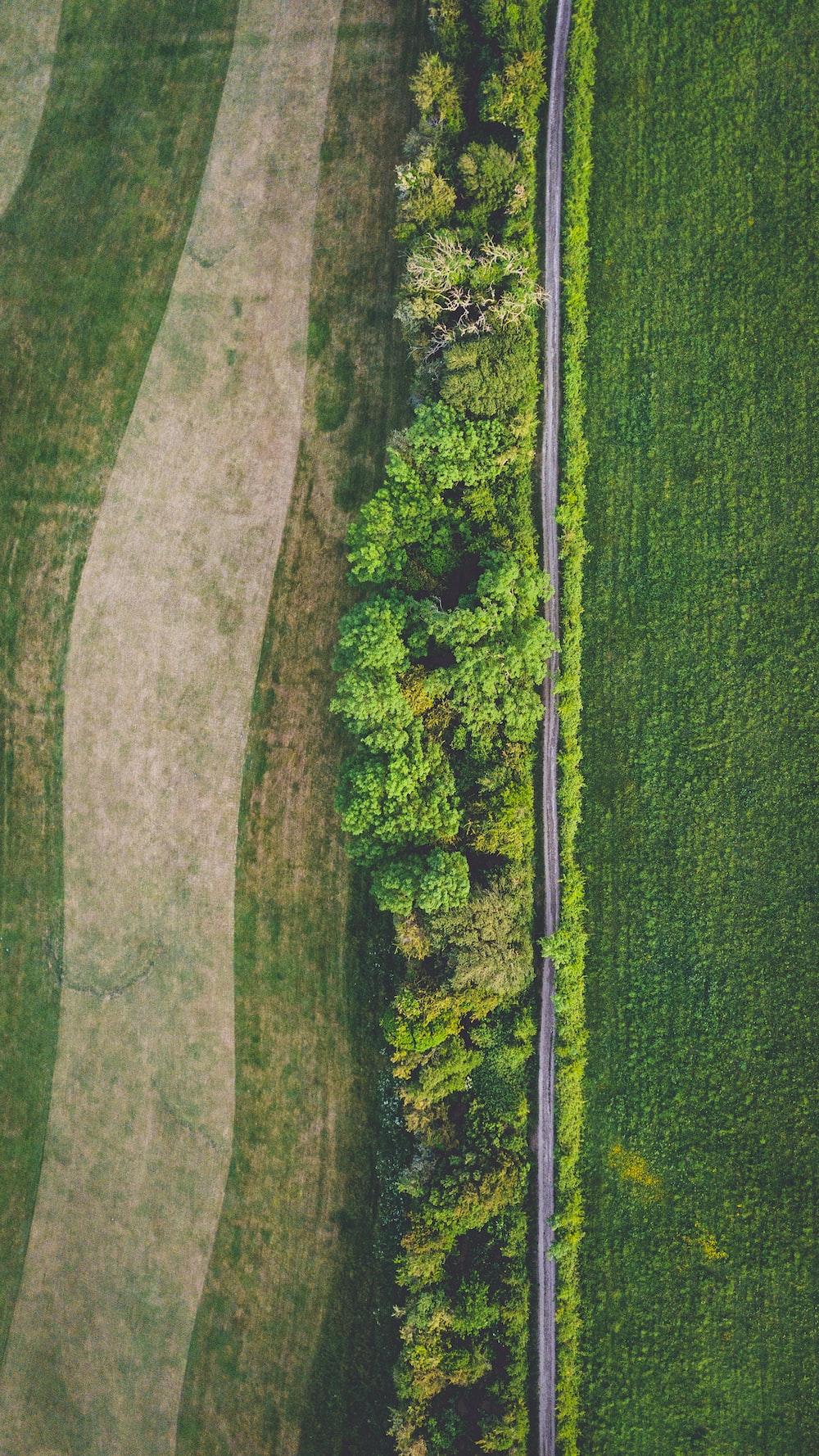 green grass field during daytime