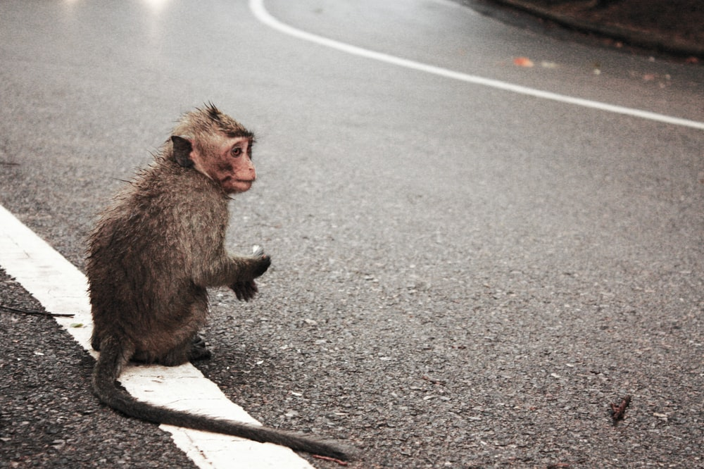 brown monkey sitting on gray concrete floor