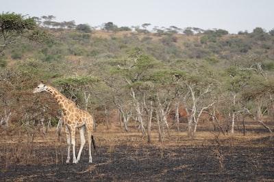 uganda zoom background