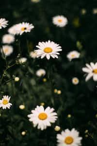 MY FLOWER love stories