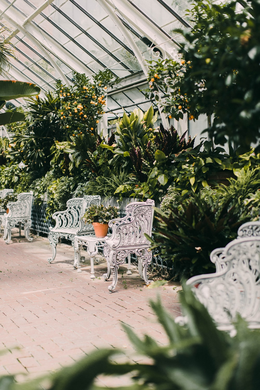 white metal bench near green leaf plants during daytime