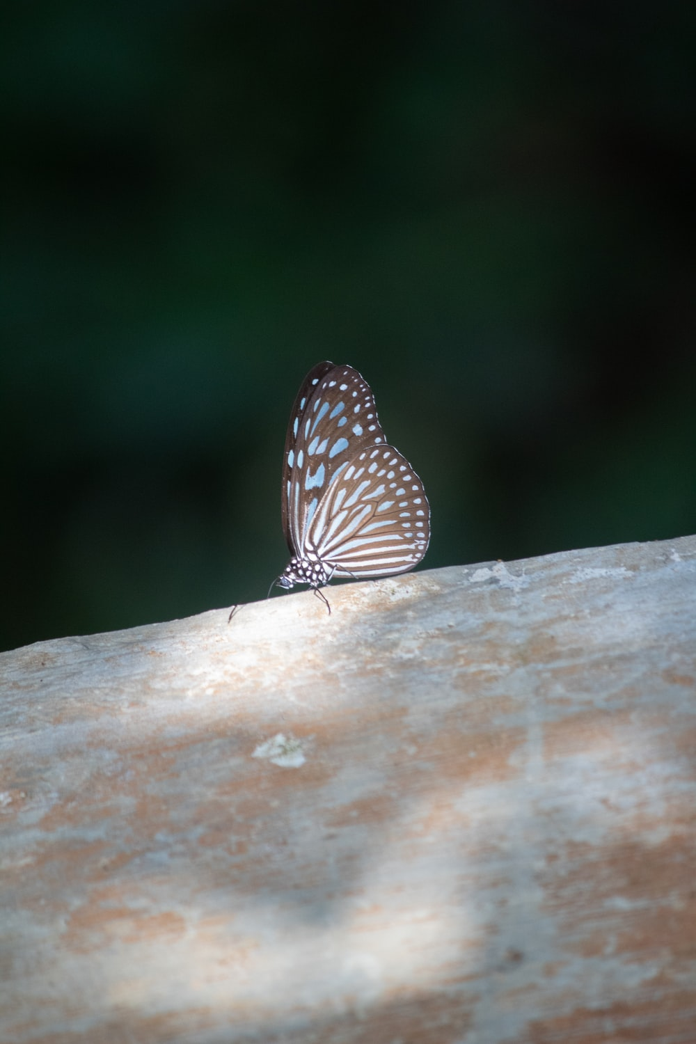 brown and white butterfly on brown wooden surface