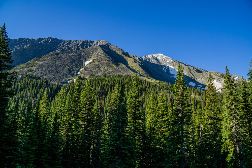green pine trees near mountain under blue sky during daytime