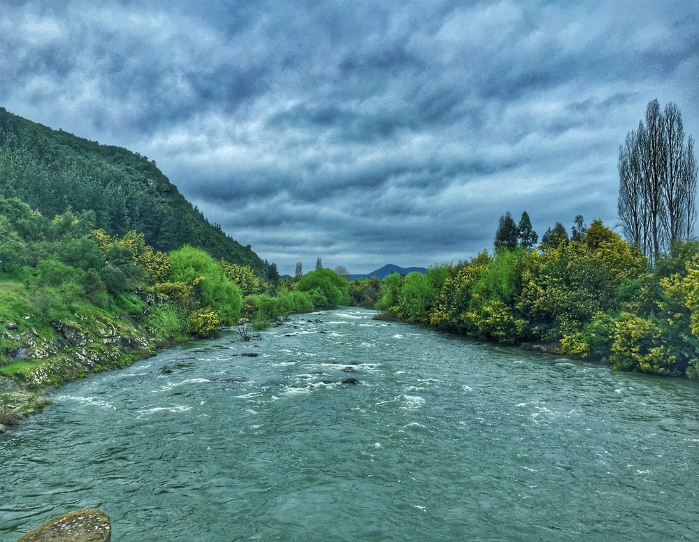 green trees beside river under cloudy sky during daytime