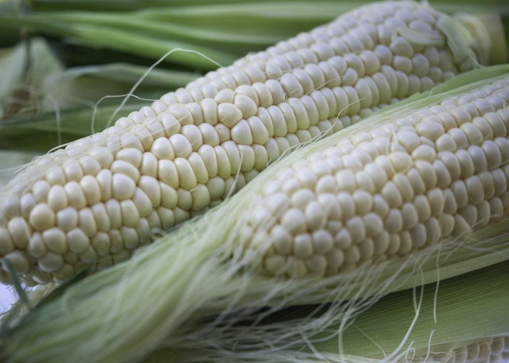 white corn on green textile