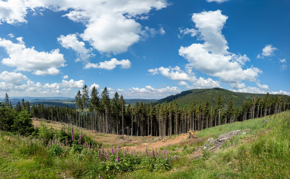 green pine trees under blue sky and white clouds during daytime