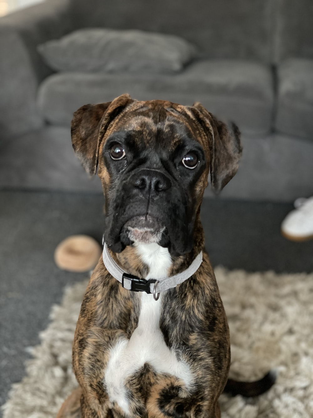brown and black short coated dog