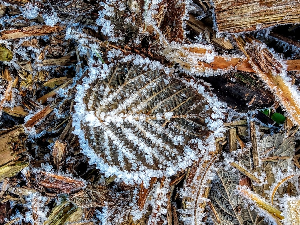 white snow flakes on brown dried leaves