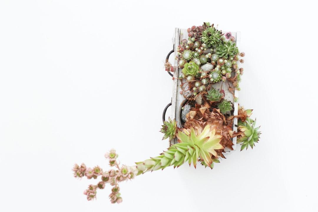 sedum flower arrangement