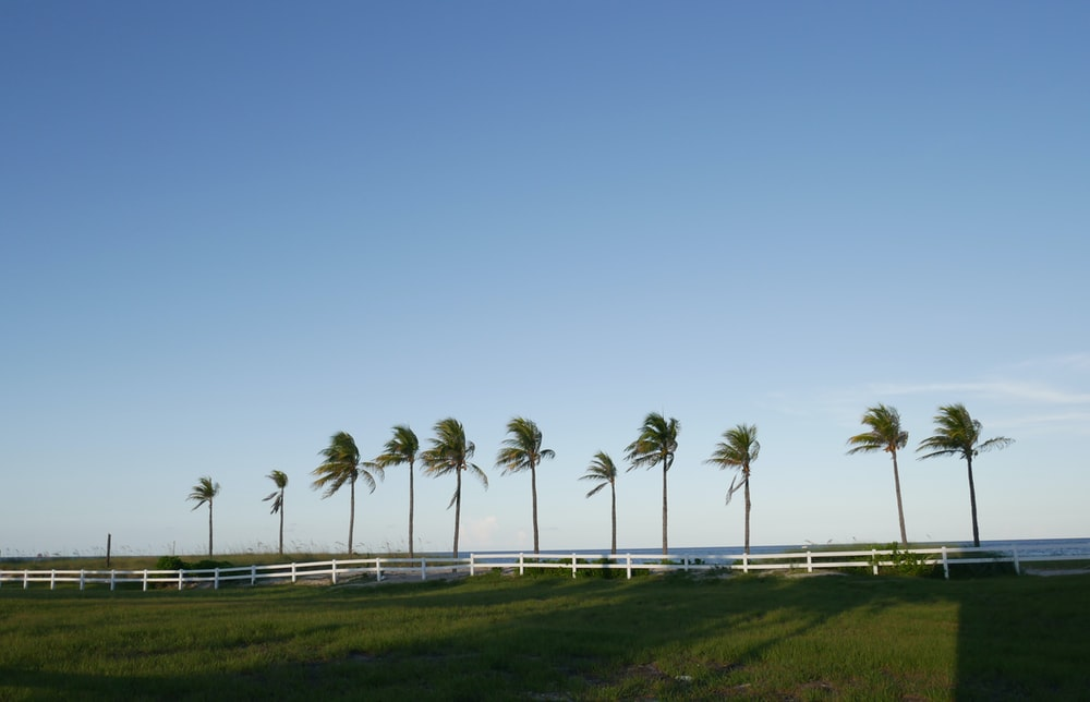 green coconut palm trees on green grass field under blue sky during daytime