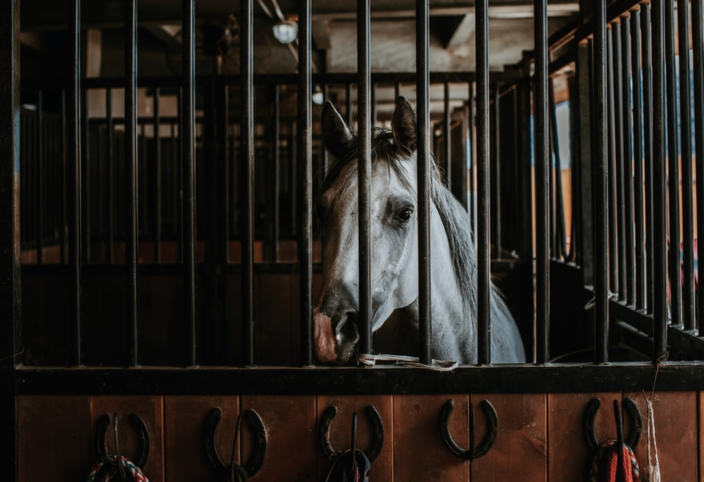 white horse in brown cage